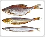 Fish oil component provides long-term preconditioning protection for vision cells