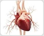 Study elucidates how lymphocytes regulate immune response after heart attacks
