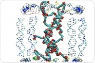 Researchers Chemically Imprint Polymer Particles with DNA Strands