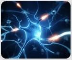 Biologists discover new genetic pathway for injured nerve regeneration