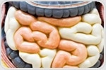 Western diets promote bacterial growth in the small intestine, increase fat digestion and absorption