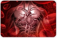 Circulating immune cells found to worsen, rather than improve heart disease