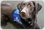 Therapy dogs found to be effective in reducing ADHD symptoms in children