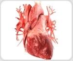 New NIH grant may help design safer heart pumps