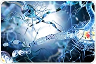 Research could potentially lead to new treatments for neurodegenerative diseases