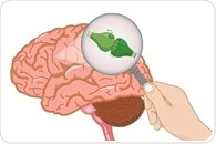 Does Cannabis Consumption Alter Neuropsychological Function?