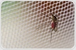Graphene-lined fabric could slow the spread of malaria