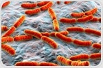 Does the Microbiome Interact with the Human Endocrine System?