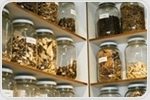 Authenticating Complex Herbal Products using Liquid Chromatography