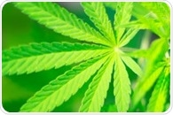 International system can provide practical guideline on cannabis use, say researchers