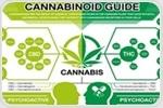 A Failed Cannabis Hair Test - How Topical Application Results in Cannabinoid Incorporation