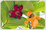 Chemical found in tropical flower could help to treat deadly pancreatic cancer
