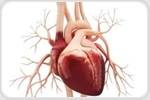 Mayo Clinic study uncovers stem cell-activated mechanisms of healing after heart attack