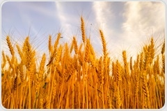 Individuals with celiac disease at increased risk of premature death