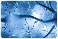 Inhibition of sphingolipid metabolism and neurodegenerative diseases