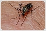 Study reveals malaria's secret to surviving in the blood stream