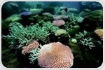 Genetic sequencing can reveal evolutionary differences in reef-building corals