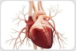 Sleep apnea treatment can lower daytime resting heart rates in patients with prediabetes