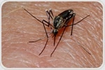 Study offers new insight on molecular mechanisms that allow malaria parasites to spread disease