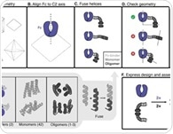 Designed proteins assemble antibodies into modular nanocages