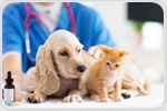 Death of a family pet can potentially lead to mental health issues in children
