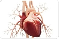 UH pharmacologist to explore cause and treatment for left ventricular non-compaction cardiomyopathy