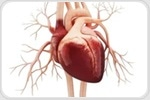 Study shows why some stroke patients do not have abnormal heart rhythms