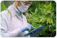 Pesticide Analysis in Cannabis