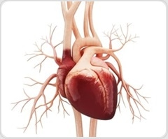 New seminar by CRF aims to provide patients and caregivers deeper understanding of heart failure