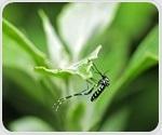 Chikungunya, dengue, and Zika viruses: three viruses in one mosquito