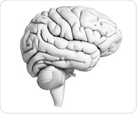 SDSU neuroscientist explores how the brain works to retrieve correct word from memory