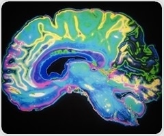 Molecule may play role in helping maintain balance of excitatory and inhibitory neurons