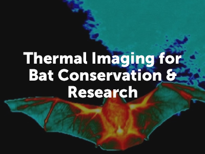 Thermal Image of Bat